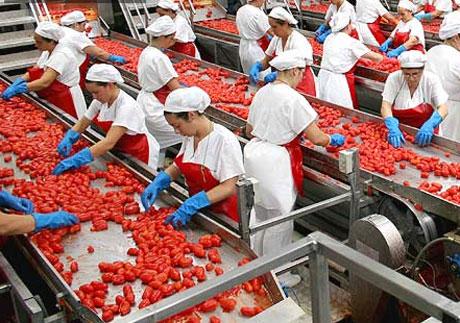 Princes Industrie Alimentari: 1000 assunzioni in Puglia ...